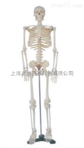 ZK-XC102  全身骨骼模型